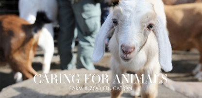 Farm & Zoo Roundup